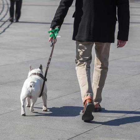 you walking the dog in the city Zdjęcie Seryjne