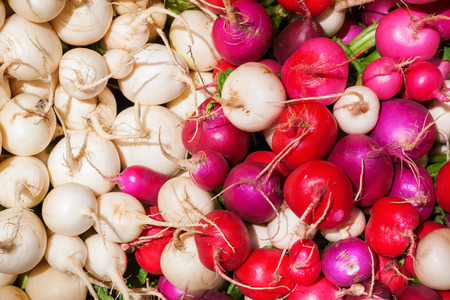 species: pile of different species of radishes