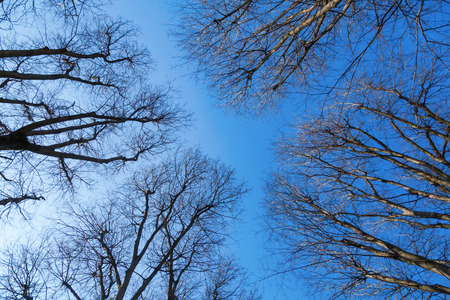 angle view: low angle view of leafless trees