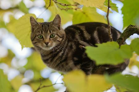 limetree: cat sitting in a tree