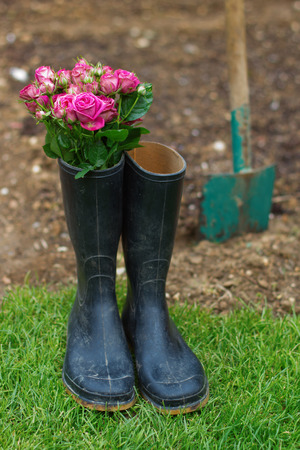 gumboots: roses in gumboots with a spade in the background Stock Photo