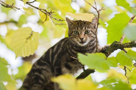 limetree: cute cat in a tree