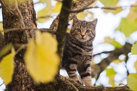 limetree: kitten in a limetree