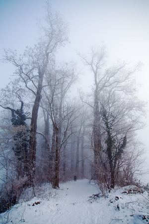 Bäume entlang eines Waldweges an einem nebeligen Wintertag