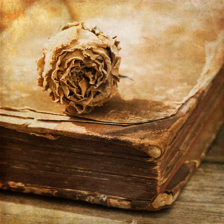 perishable: picture of a dried rose lying on on antique book