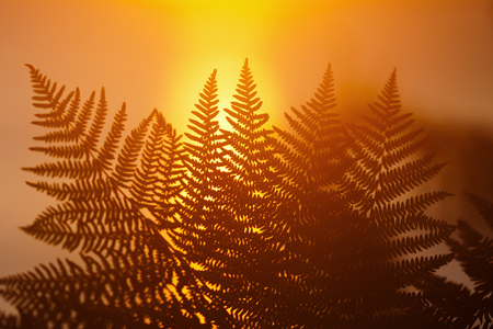 fronds: Far fronds against the rising sun