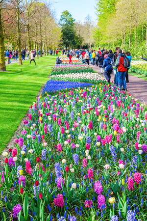annually: Lisse, Netherlands - April 23, 2016: Keukenhof with unidentified people. It is one of the worlds largest flower gardens. Approximately 7 million flower bulbs are planted annually in the park Editorial