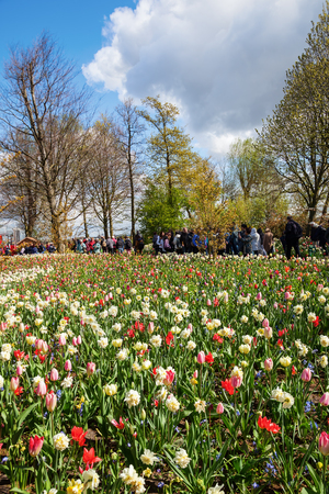 jardines con flores: Lisse, Netherlands - April 23, 2016: Keukenhof with unidentified people. It is one of the worlds largest flower gardens. Approximately 7 million flower bulbs are planted annually in the park Editorial
