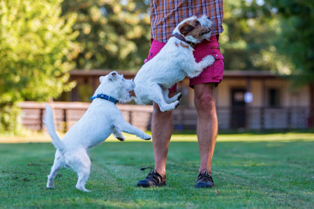 persona saltando: el hombre está jugando con su Parson Russell Terrier