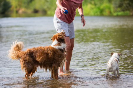 woman plays with an Australian Shepherd and a Parson Russell Terrier in a river