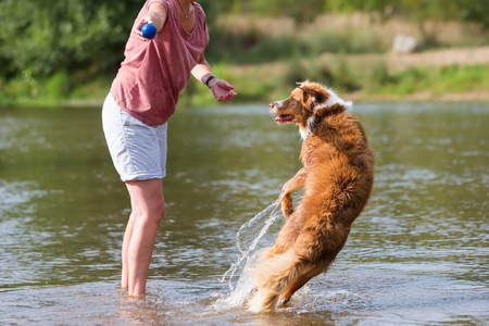 woman plays with an Australian Shepherd dog in a river