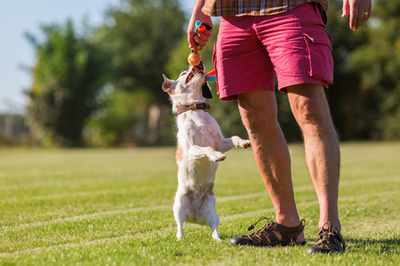 man plays with his Parson Russell Terrier on the meadow