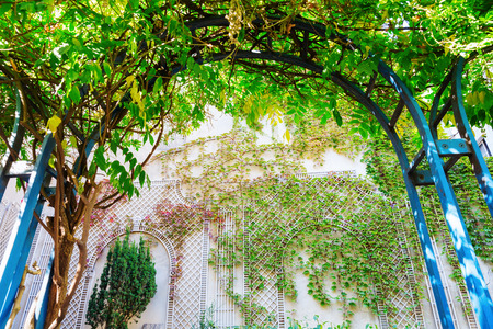 tendrils: climbing plant arch with view on a wall with vintage style climbing supports covered with tendrils