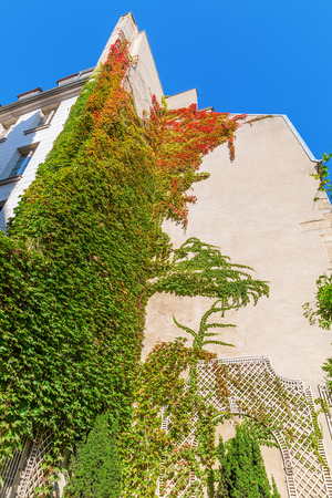tendrils: old city building in Paris overgrown with vine tendrils Stock Photo