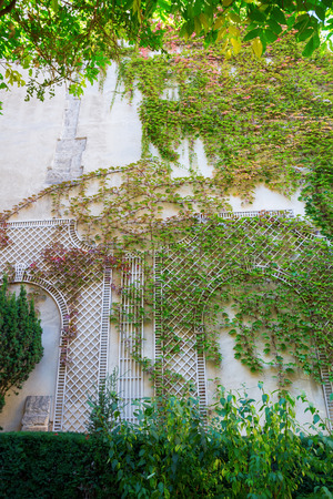 tendrils: wall with vintage style climbing supports covered with vine tendrils