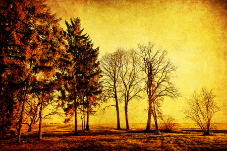 picture of trees with antique style texture