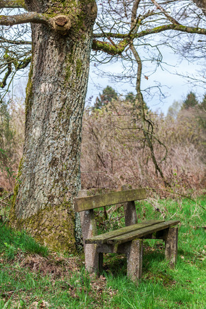 edge: old weathered bench at a forest edge