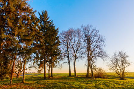 natue: picture of a rural landscape with trees at sunset Stock Photo