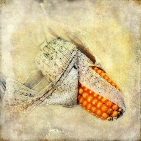 corncob: picture of a corncob on vintage style texture
