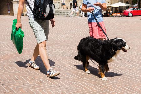 bernese mountain dog: two men walking with a bernese mountain dog in a town