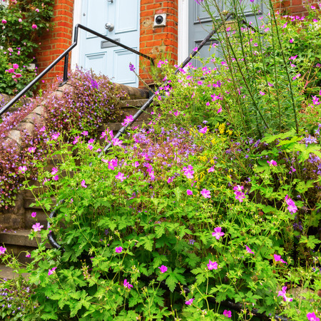 entrance overgrown with geranium plants in London, UK Stock Photo