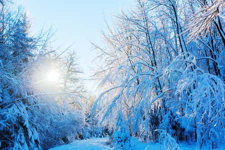 landscape picture of a forest path with snow covered trees