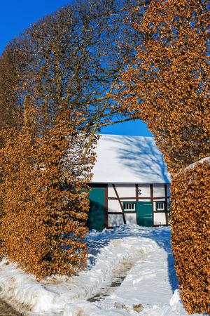 farm house with traditional high beech hedge in Hoefen, Eifel region, Germany