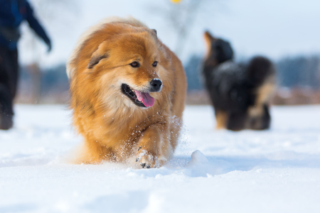 Elo dog with others in the snow