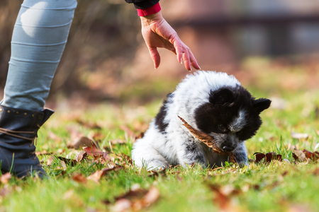 woman grasps to a leave in the snout of an Elo puppy Stock Photo
