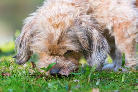 picture of a cute dog sniffling in the grass Stock Photo