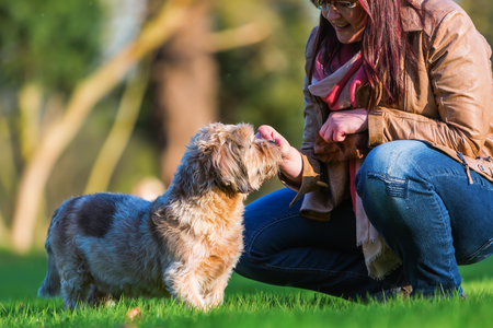 picture of a young woman giving her dog a treat Stock Photo