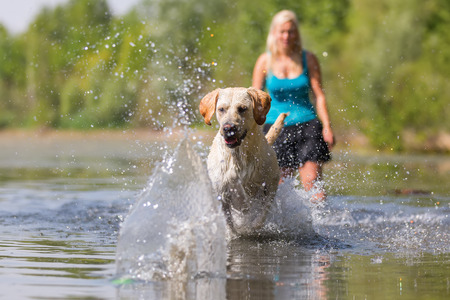 woman plays with a labrador dog in the lake