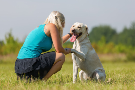 fondling: woman gets the paw from a labrador dog and she pets him