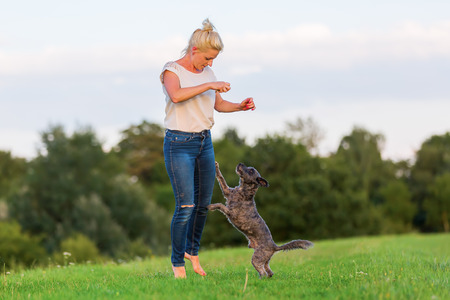 picture of a woman who plays with a terrier hybrid dog on a meadow