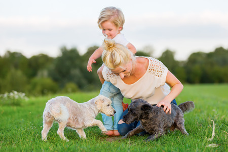 woman plays with her son and two small dogs on a meadow