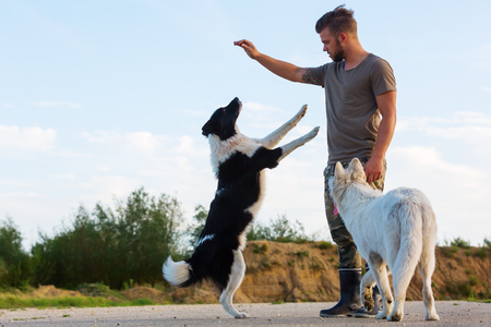 young man plays with a border collie and a white German shepherd outdoors