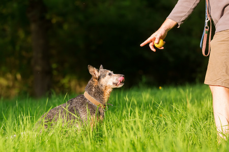 person plays with an Australian cattledog outdoors