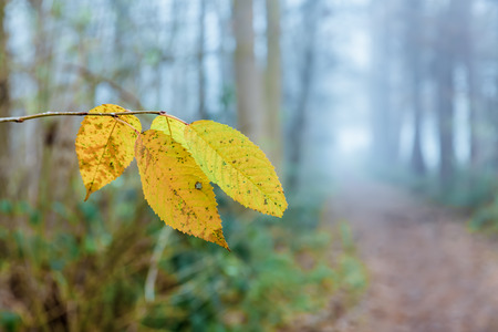 picture fo a foggy forest path with focus on autumn leaves in the foreground Stock Photo