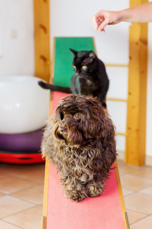 picture of a woman who works with a cat and a dog in an animal physiotherapy office Stock Photo
