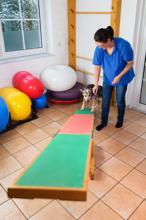 woman works with an Australian Cattledog on a seesaw in an animal physiotherapy office