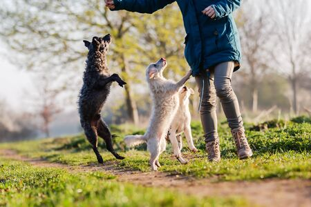 picture of a woman walking with cute small dogs outdoors
