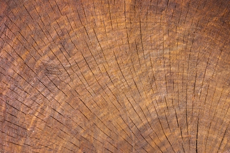 Wood texture with focus on the woods grain Stock Photo