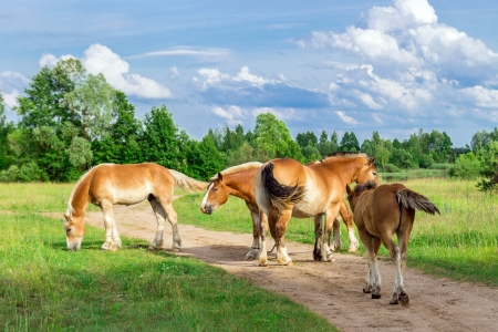 Horses on a green grass  photo