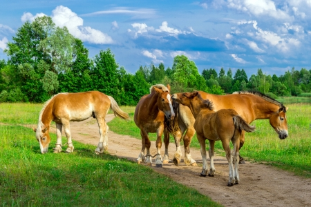 Horses on a green grass