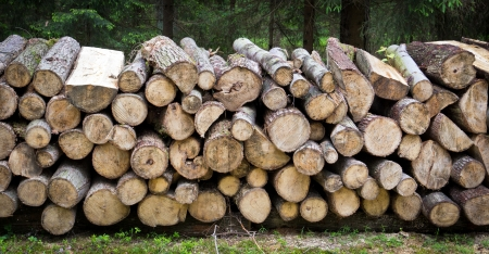 Pile of wood logs ready for winter Stock Photo - 21084555