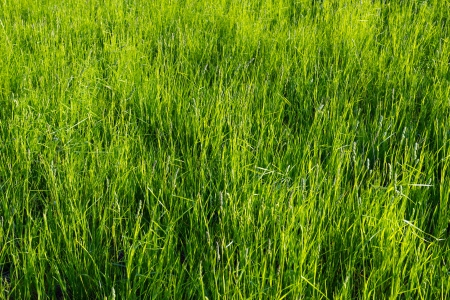 A background image of green field Stock Photo