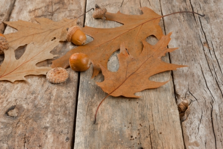 Autumn oak leaves and acorns on the abstract background Stok Fotoğraf - 23790029