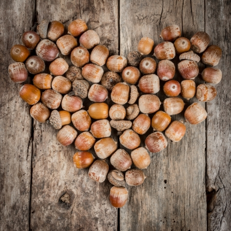 acorn tree: Acorns forming a heart on a wooden background