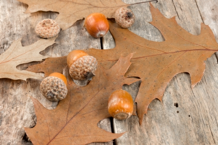 Autumn oak leaves and acorns on the abstract background photo