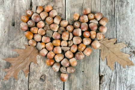 Acorns forming a heart on a wooden background photo